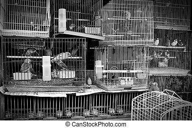Caged Birds at pet store - A stack of mistreated caged birds...