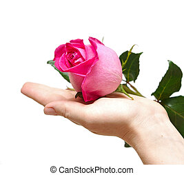 rose in womens hands