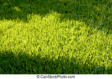 grass land with sunshine - a corner of grass land with...