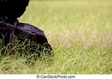 grass land - a grass land with rock