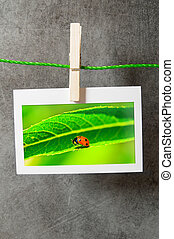 Lady bug in the picture frame