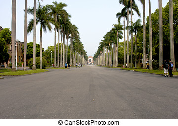 Coconut tree forest main road