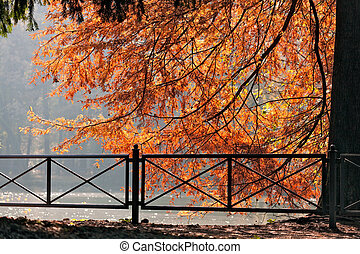 Autumn scene at the Lake in Parco di Monza Italy
