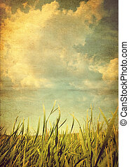 Retro photo meadows with grass in the summer day