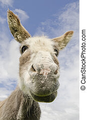 Scruffy untidy Jackass or Donkey - Humorous image of a jack...