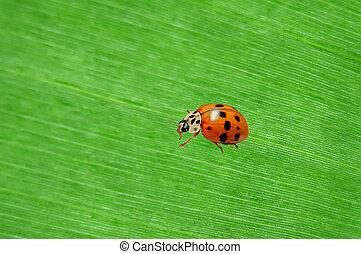 ladybug on a green palm leaf