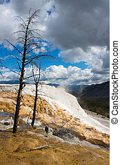 Dead trees at Mammoth Hot Springs, Yellowstone - Dead trees...