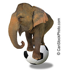 Asian elephant and football soccer ball