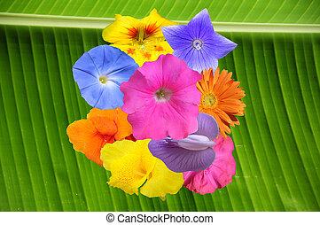 Gardening flowers collage