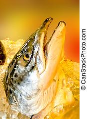 peixe, venda, gelo, fresco, decorado, mercado
