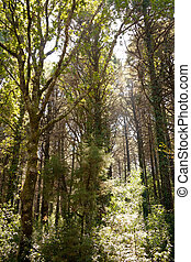 nature scenic of sunlight through trees and vegetation