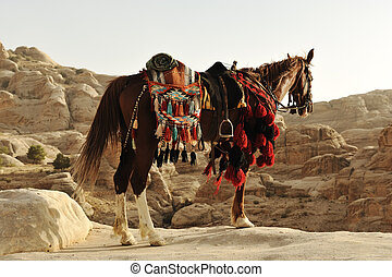 Arabian horse in Petra with traditional clothes, Jordan