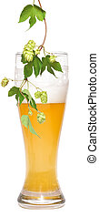 beer and branch of hop