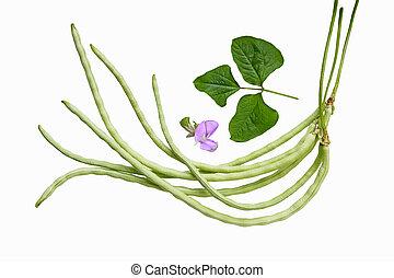 Long Bean - Swirl Vigna sesquipedalis Fruwirth Vigna...