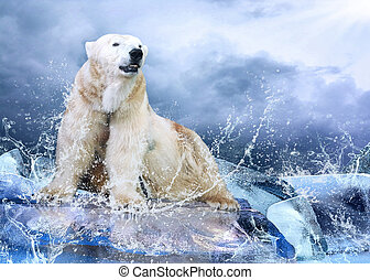 White Polar Bear Hunter on the Ice in water drops