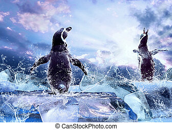 Penguin on the Ice in water drops