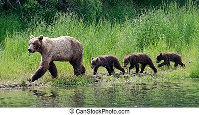 Samica, Alaskanin, brązowy, Niedźwiedź, szczeniaki