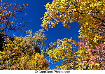 Golden leaves against blue sky