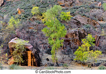 Trees and boulders in Zion National Park