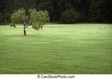 Apple tree in field - Lone apple tree in green field