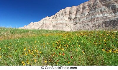 Badlands National Park - USA - Wildflowers sway in the wind...