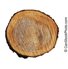 tree stump on a white background