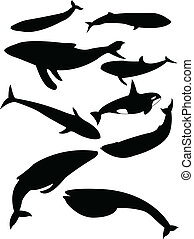 whales silhouette - Collection of whales silhouette - vector