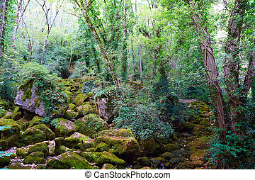 Forest Stream Near the Town of Florac, France
