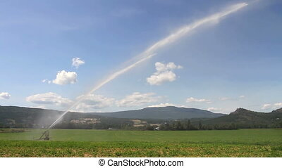 Irrigation Sprinkler - Irrigation sprinkler watering hay...