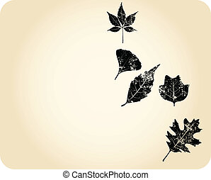 Grunge autumn leaves - Autumn leaves. Oak, Sycamore, Maple,...
