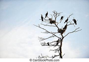 Cormorants roosting on a branch of a dead tree on background...