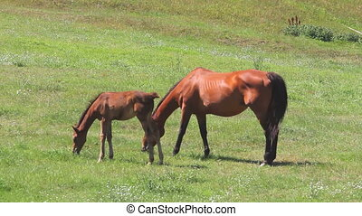 Horse with Colt 01 - Horses in pasture