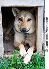 dog - portrait of the young dog in kennel