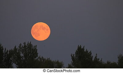 Full moon rise on dark twilight sky background - long shot