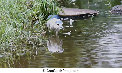 Bird fishing in the pond