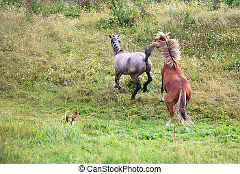 namoro, cavalos