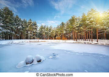 Winter forest. Composition of nature.