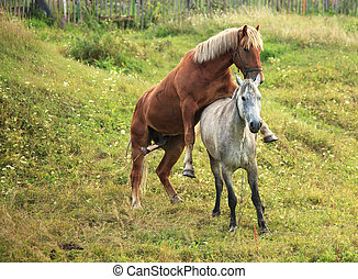 Coupling horses
