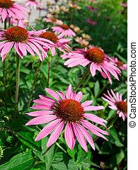 flowers in green field