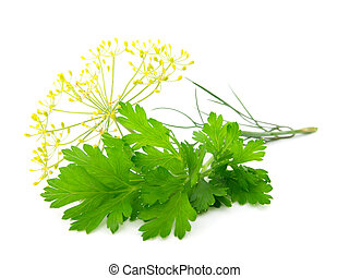 Fresh parsley on white background.