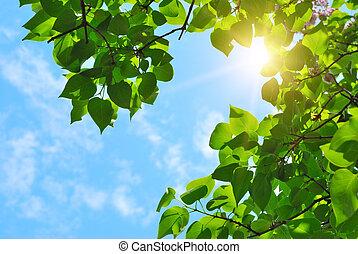 綠色, 離開, 太陽