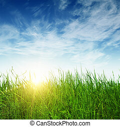 green grass and sun rays on sky background