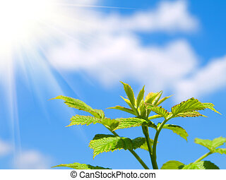 green sprout on blue sky