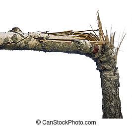 roto, árbol
