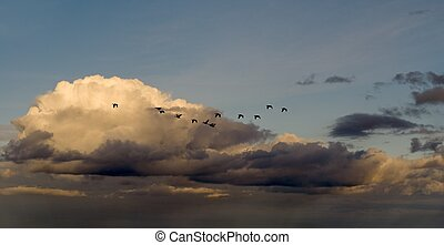Migrating birds in cloudy sky