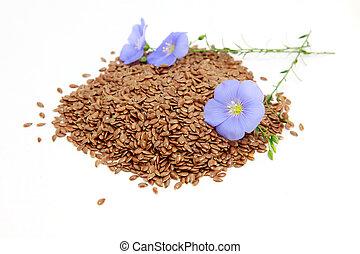 Linum usitatissimum L - flowers and seeds of linum (flax)...