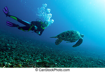 Swimming green turtle Chelonia mydas and diver, Gili meno,...