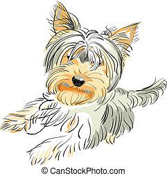 vektor, pedigreed, hund, Yorkshire, terrier