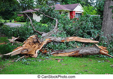 Wind Damage, Trees Down - Twisted and Broken Oak Fallen all...