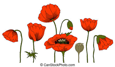 Poppies. - Vector hand drawn fantasy poppies on white.